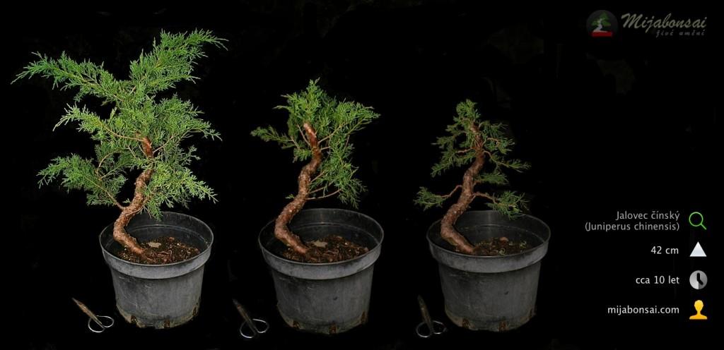 Jalovec-cinsky-bonsaj-bonsai-juniperus-chinensis